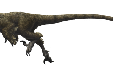 Utahraptor ostrommaysorum (Emily Willoughby)