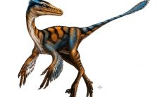 Troodon picture