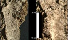Fossil human footprints
