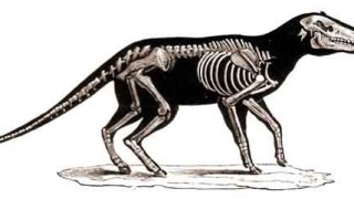 http://westerndigs.org/global-warming-caused-dwarfism-in-ancient-american-mammals-fossils-show/