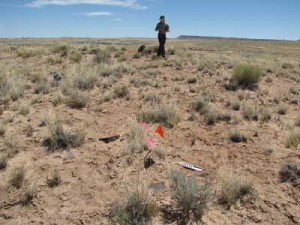 Archaeologists surveying land acquired by Petrified Forest National Park have found traces of two ancient villages. The flags mark a site where pottery was found.