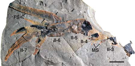 sea-scorpion-fossil
