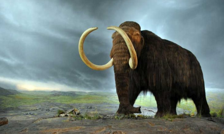 cc95bd39933 They are perhaps the most iconic animals of the Ice Age. But woolly mammoths  survived in North America an astonishing 6