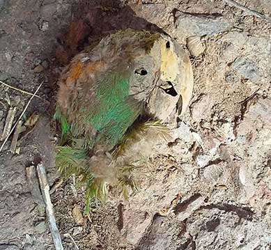 Mummified Bird, Baby Found in Cave Shed Light on Earliest Desert Farmers