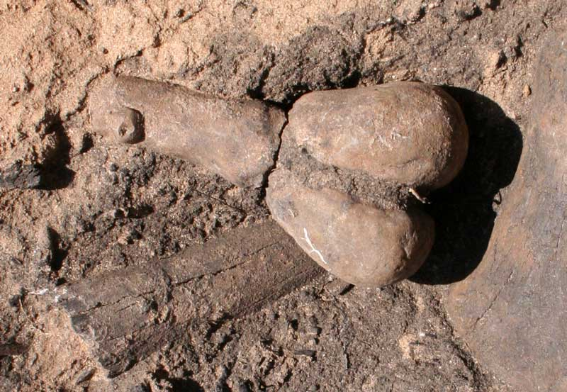 Earliest Known Clay Figurines in the Southwest May Be Fertility Symbols, Study Says