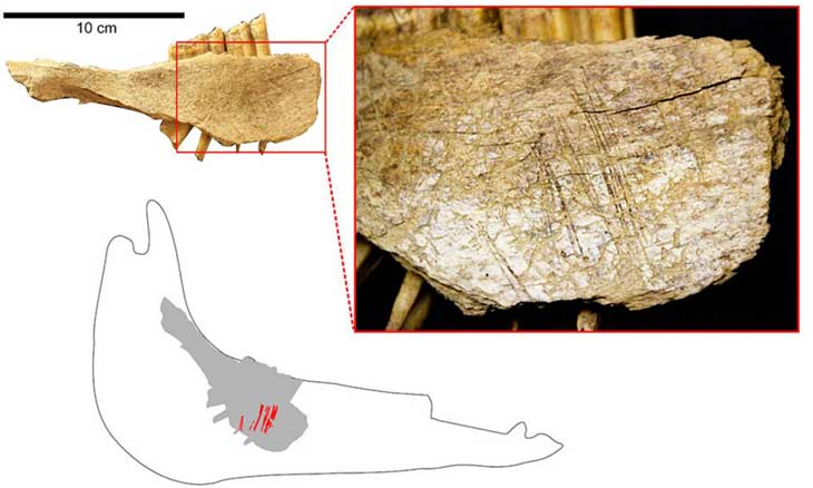 Bones in Yukon Cave Show Humans in North America 24,000 Years Ago, Study Says