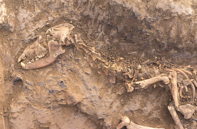 ancient dog burial