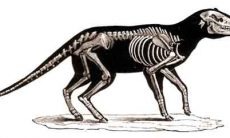 http://dev.westerndigs.org/global-warming-caused-dwarfism-in-ancient-american-mammals-fossils-show/