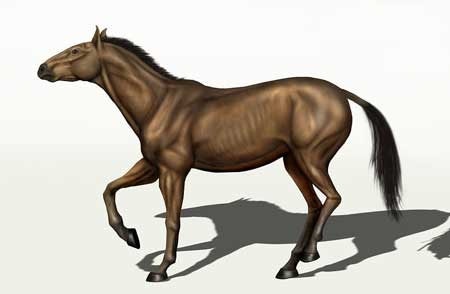 equus_conversidens extinct horse